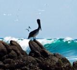 Ixtapa is home to more than 320 birds; photo from Ixtapa-Zihuatanejo (http://www.visitiz.travel/)