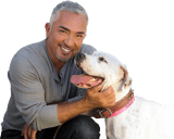 The Cesar Millan PACK Project