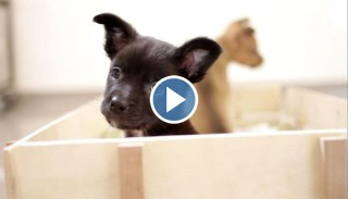 Puppies Found In A Field Have Adorable Play Date Together