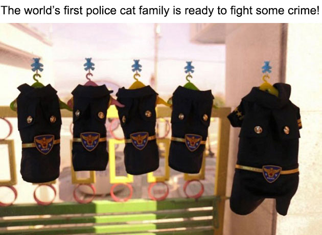 09-molang-police-cat-710x472