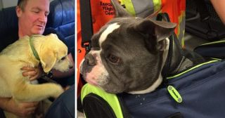 You'll Never Guess What These Airlines Did So That Pets And Their Owners Could Escape Wild Fires!