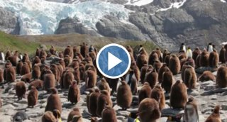 Can You Spot The Bear Among The Penguins?