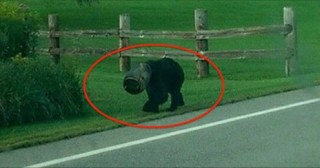 Frightened Bear Has A Bucket Stuck On His Head. Now Watch When These Men Approach…