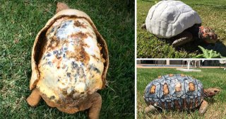 You'll Never Guess How They Rescued This Injured Tortoise!