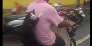 Cats in Thailand seem to have a much higher skill set. Can you believe THIS?
