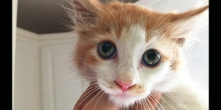 Kitten Trapped In Storm Drain Rescued After 96 Hours!