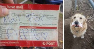 Kind Postman Writes Personal Letters for a Dog Who Loves Getting Mail