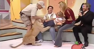 This Encounter Between A Lion And A Toddler On Television Is A Reckless Disaster
