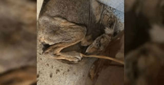 "Woman Rescues A Scared ""Dog"" That Turns Out To Be A Different Animal Entirely"