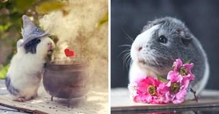 The Brilliantly Photogenic Guinea Pig: Mieps