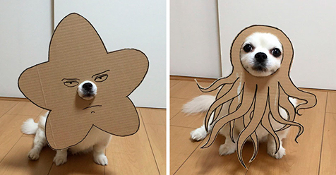 Japanese Woman Creates Hilarious Cardboard Cutouts With Her Dog