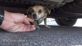 How A Little Microchip Changed This Dog's Life! Please Share!