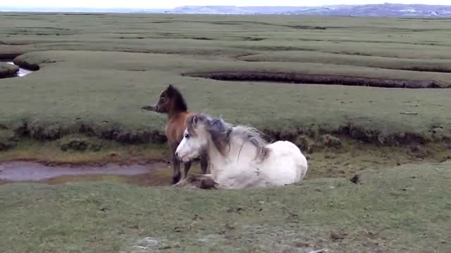 Pony And Her Foal Were Heroically Rescued From A Bad Situation