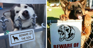 "24 Dangerous Dogs Behind ""Beware Of Dog"" Signs"