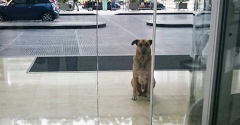 Flight Attendant Adopts Dog Who Never Stopped Waiting For Her Outside Hotel