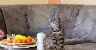 Watching This Adorable Kitten Play With A Straw Will Make Your Whole Day