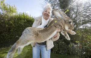 World-largest-rabbit-gets-competition-from-his-own-son2