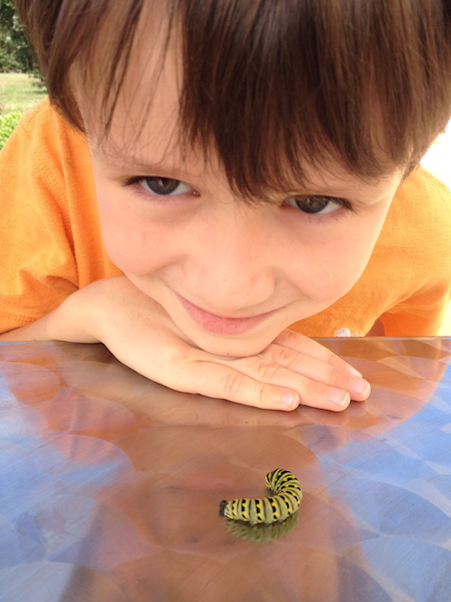 Keeping Bugs as Pets - Caterpillars and Butterflies | TooCoolforHomeschool.com