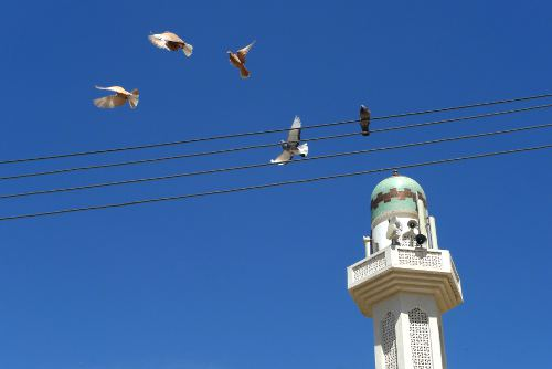 Flight of the Pigeon, Muscat, Oman