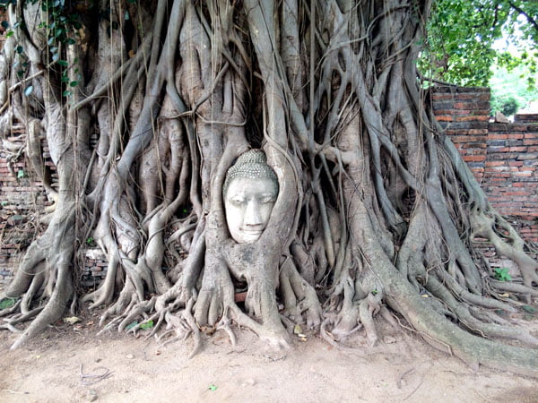 Ayuthaya - Wat Maha That buddha head roots