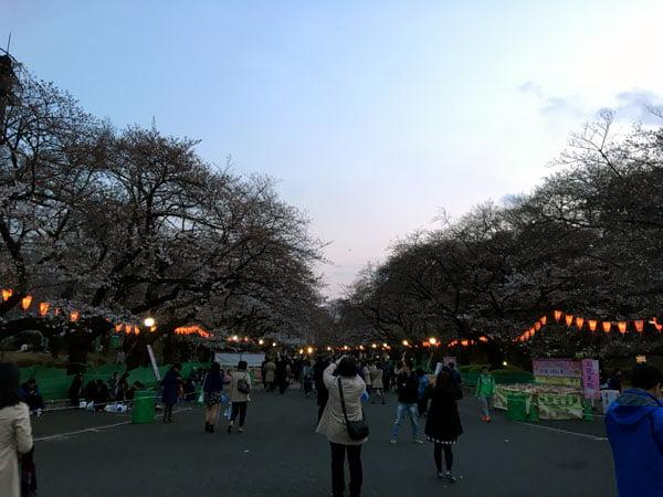 Tokyo Ueno Park Sakura Half