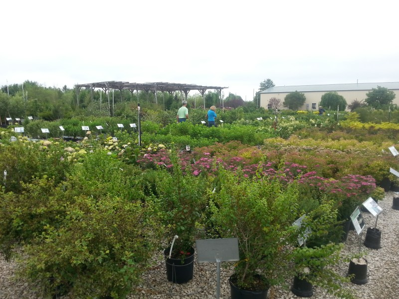 Large Of North Branch Nursery