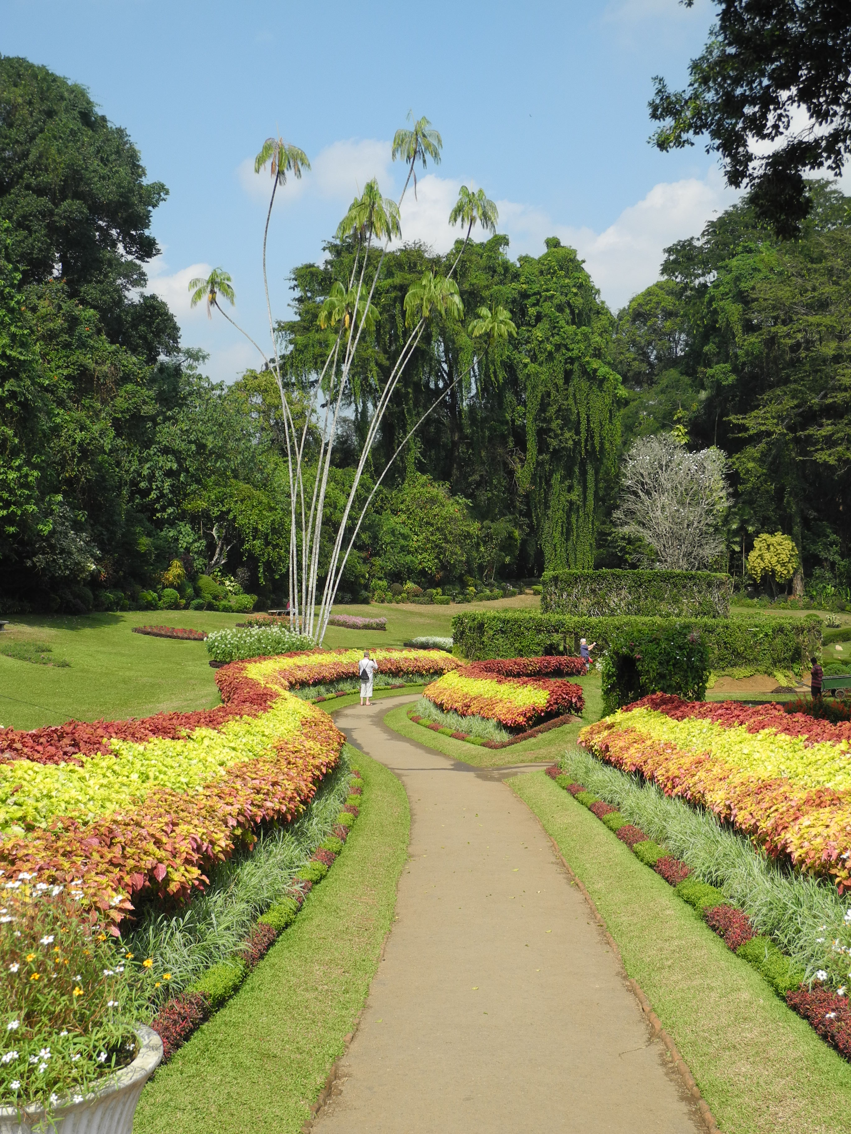 Royal botanic garden sri lanka the other side of the for Sri lankan landscaping plants