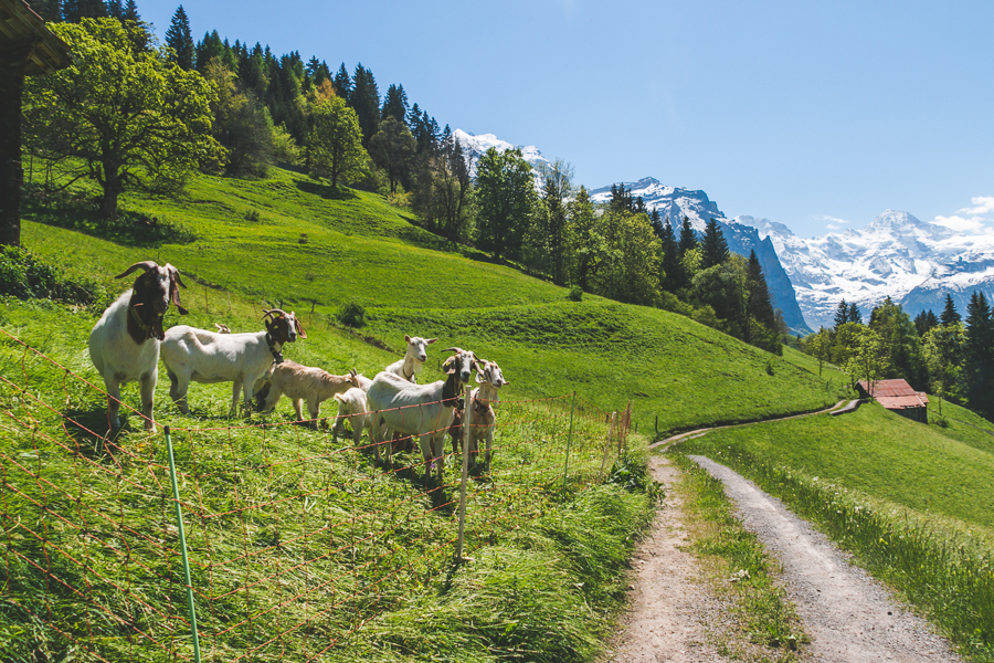 Lauterbrunnen, Switzerland - The Overseas Escape-61