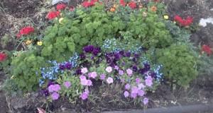 gardening with children, rainbow garden, fun garden ideas