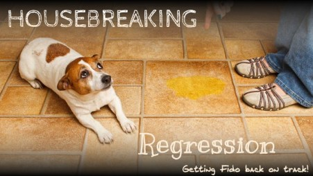 housebreaking regression