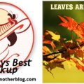 Image-SundaysBest-Leaves-Are-Falling (1)