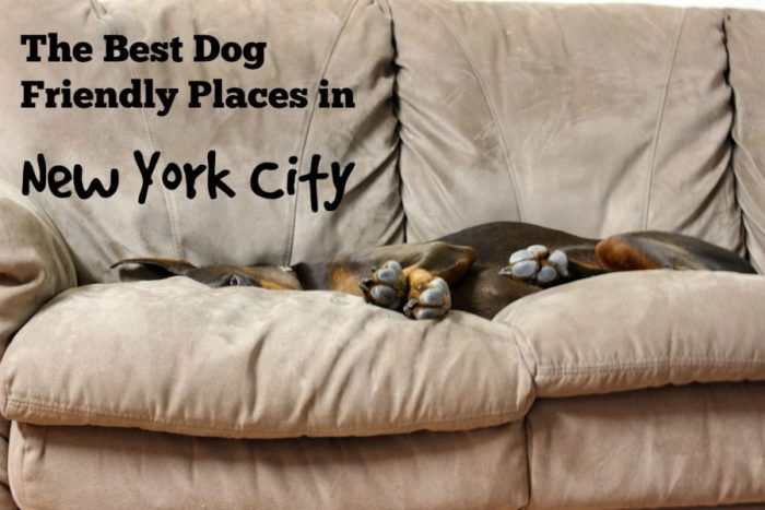 The best dog friendly places in new york city for Pet friendly hotels in ny