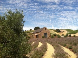 Niner Wine Estates