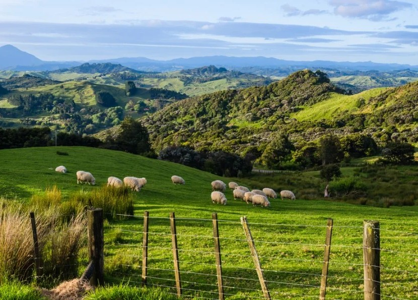 Win a hiking trip around New Zealand. Shutterstock.
