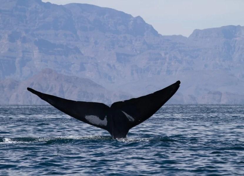 Win a trip to Baja, California. Shutterstock.
