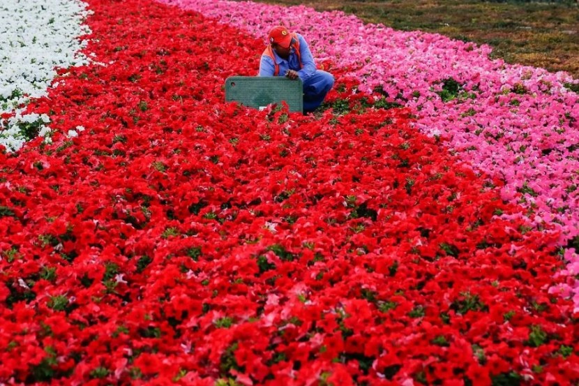 A worker tends to the flowers outside the Emirates Palace Hotel