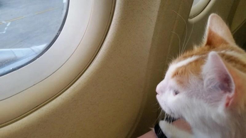 Halina enjoys the window seat. (Photo courtesy of Nikki Crandall-Seibert)