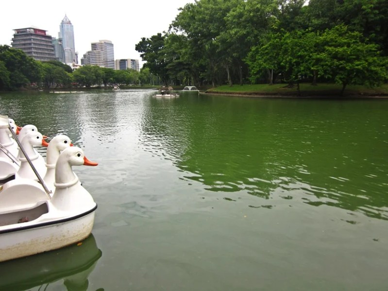 Paddle boats on the lake in Lumpini Park and Bangkok's buildings looming in the background