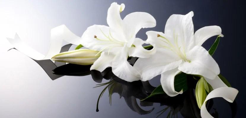 lilies shutterstock_142002439