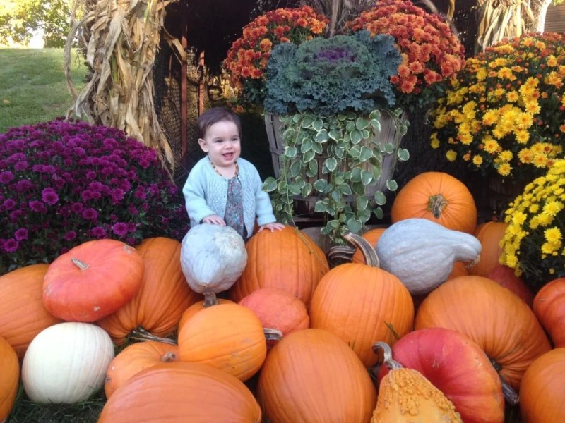 Evy was a big fan of the pumpkin display outside Orvis' flagship store.