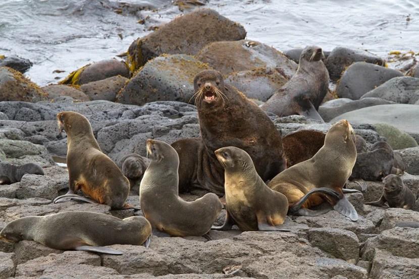 Sea lions on St. Paul Island. Image courtesy of Martha de Jong-Lantink.