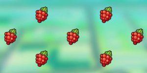 razzberries - thepokemonplace.com