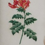 Victorian Flower Art