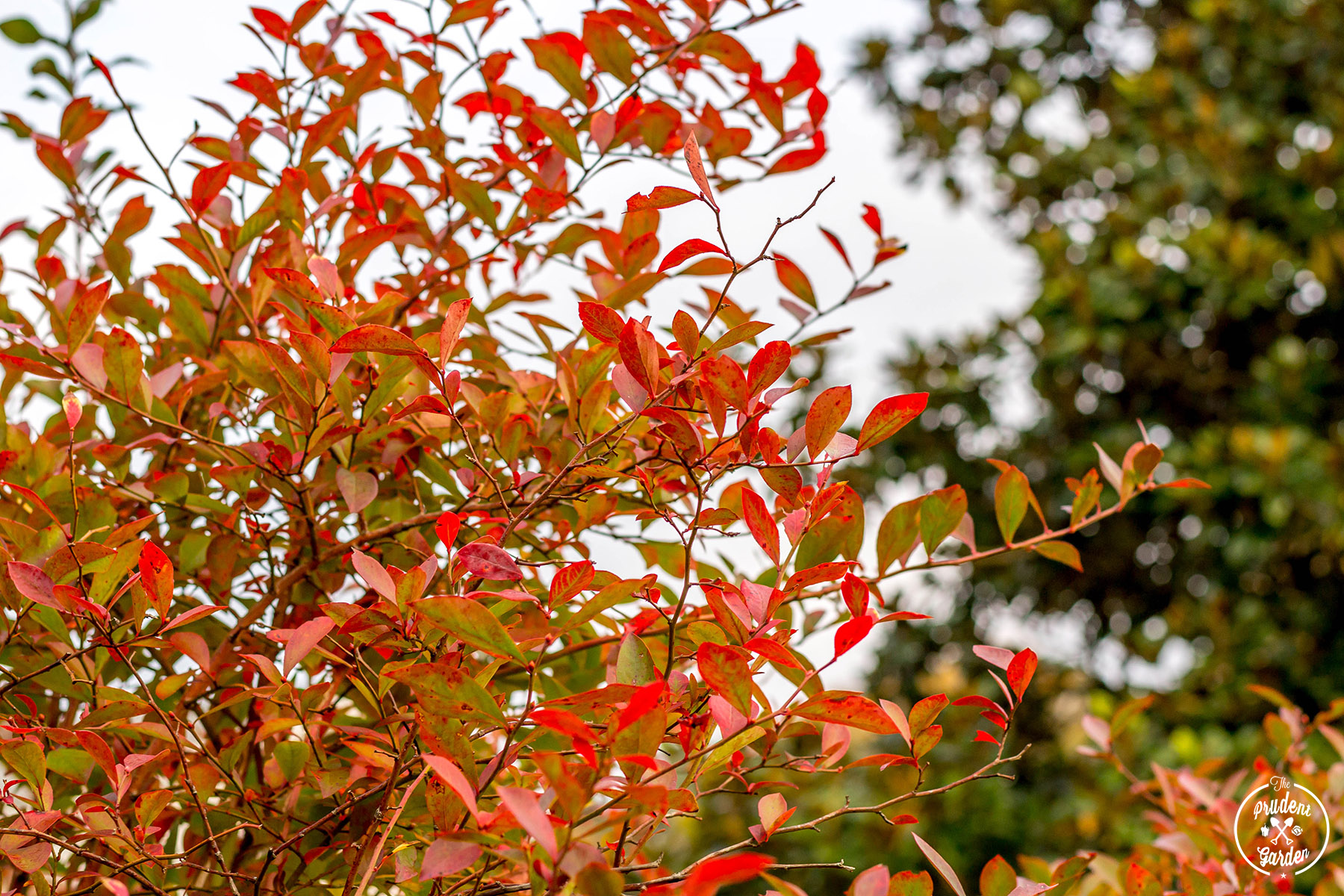 the best time to plant trees shrubs and perennials