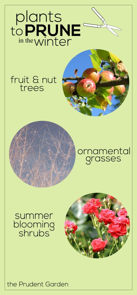 pruninginfographic
