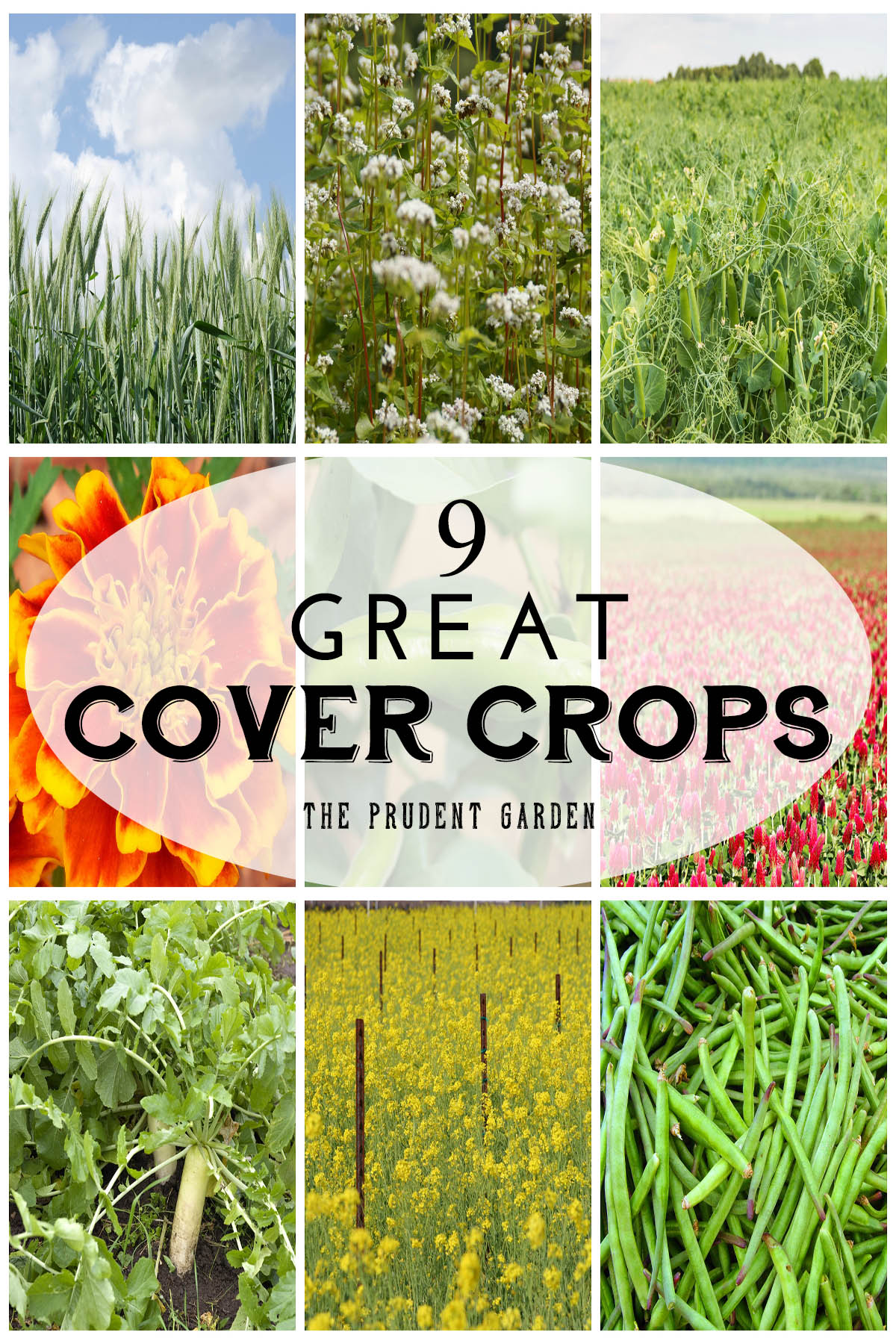 Great Cover Crops To Rejuvenate Your Garden