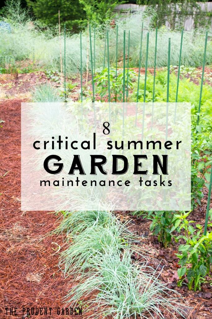 Summer Garden Maintenance Tasks