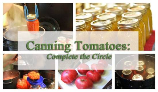 canning_tomatoes_BGgarden