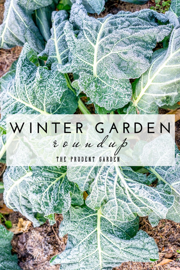 WINTER GARDEN COVER