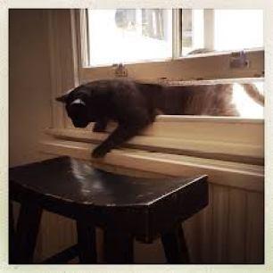 Here's a helpful cat.